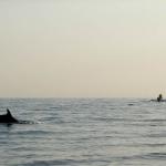 В погоне за дельфинами